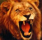 lion_rugissant