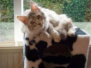 Bon, la photo a été prise quand elle était encore un chaton, mais j'adore cette bouille !